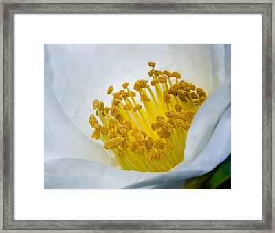 Stamen Forest Framed Print