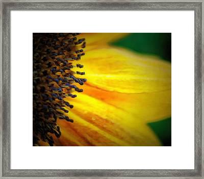 Stamen Velvet Framed Print