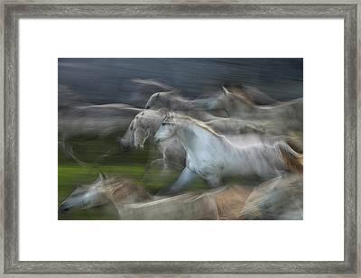Stampedo Framed Print