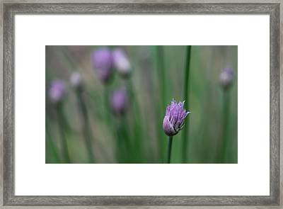 Framed Print featuring the photograph Not Just A Pretty Flower by Debbie Oppermann