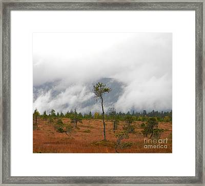 Stand Alone Framed Print by Laura  Wong-Rose