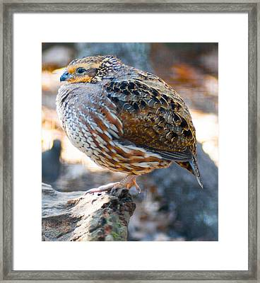 Stand Alone Framed Print by Optical Playground By MP Ray