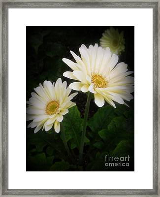 Stand By Me Gerber Daisy Framed Print by Lingfai Leung