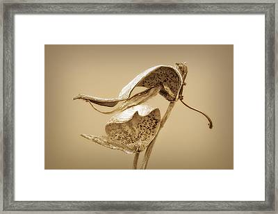 Stand By Me Framed Print by Nikolyn McDonald