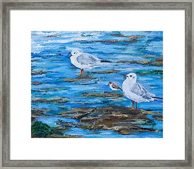 Sea Birds Wait Framed Print