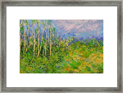 Stand Of Birch Framed Print by Kat Griffin