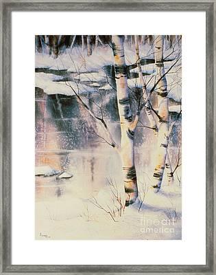 Stand Of Birch Framed Print