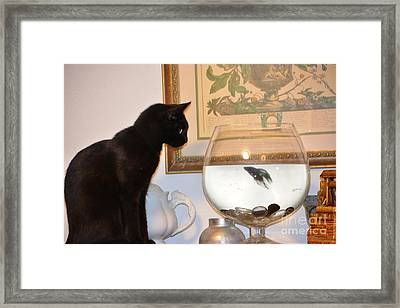 Stand Off Framed Print by Janice Spivey