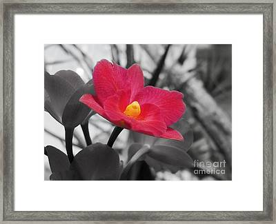 Stand Out Beauty Framed Print