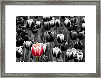 Stand Out From The Crowd... Framed Print