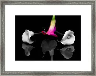 Stand Out Framed Print by Susan Candelario