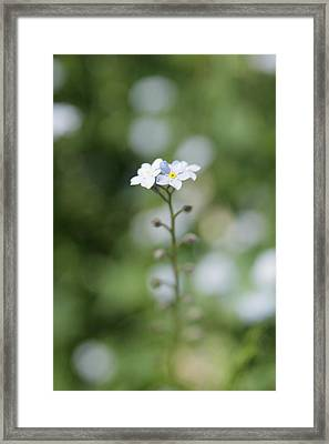 Stand Strong Framed Print by Kim Lagerhem