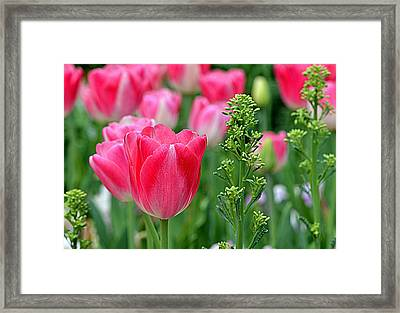 Stand Tall And Proud........ Framed Print