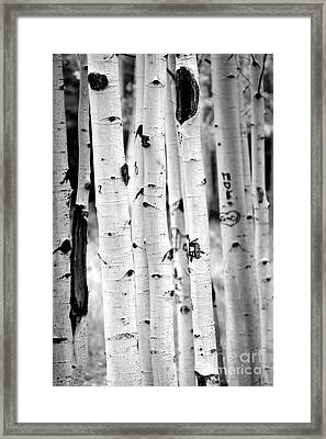 Stand Tall Aspens Framed Print by Ruth Jolly