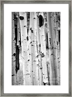 Stand Tall Aspens Framed Print