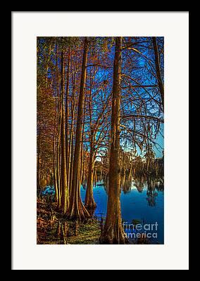 Cypress Knees Framed Prints