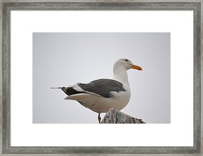 Stand With Pride Framed Print by Kiros Berhane