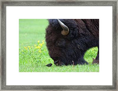 Stand Your Ground Framed Print by Jim Garrison