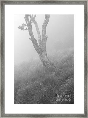 Standalone Framed Print