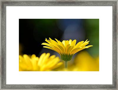 Standing Above The Rest Framed Print by Maria Urso
