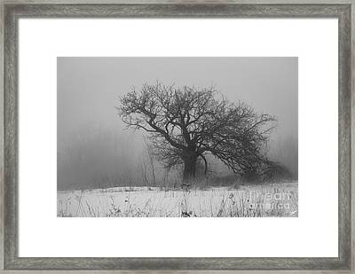Standing Alone Framed Print by Alana Ranney