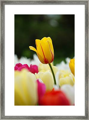 Standing Alone Framed Print by Brian Jones