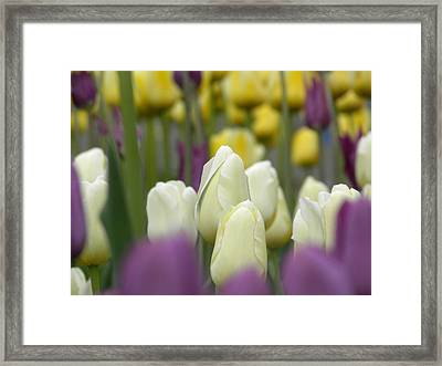 Standing Alone Framed Print by Julie Fields