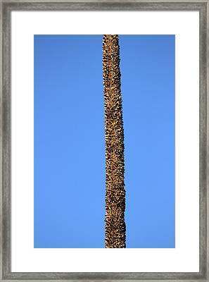 Framed Print featuring the photograph Standing Alone by Miroslava Jurcik