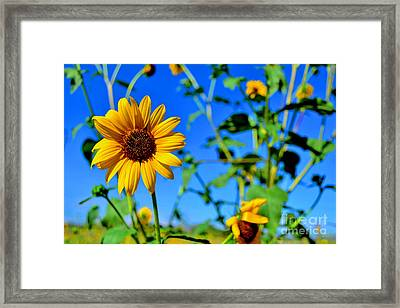 Standing Alone Framed Print