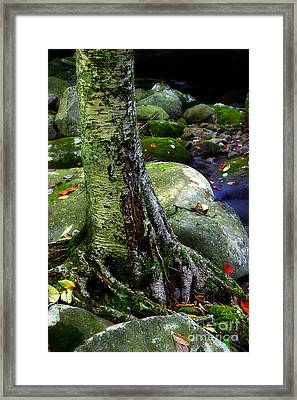Standing Along The Stream Framed Print by Michael Eingle