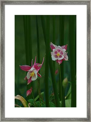 Standing Among Giants Framed Print