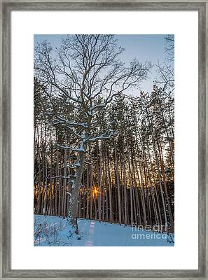 Standing Among The Many Framed Print