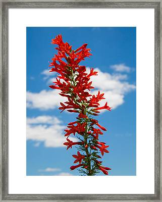 Standing Cypress With Clouds Framed Print