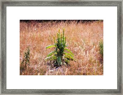 Standing Green Framed Print by Michele Richter
