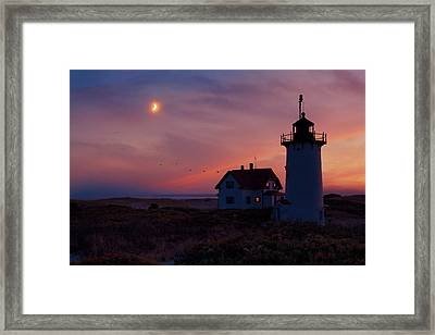 Standing Guard Framed Print by Bill Wakeley