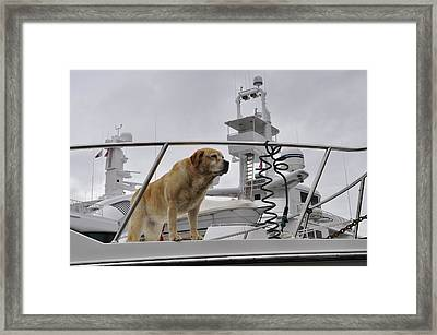 Standing Guard Framed Print by Cathy Mahnke