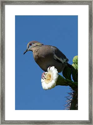 Framed Print featuring the photograph Standing Guard by Cindy McDaniel