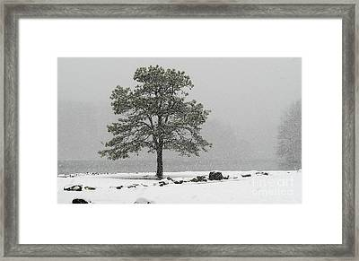 Framed Print featuring the photograph Standing In A Snow Storm by Brenda Bostic