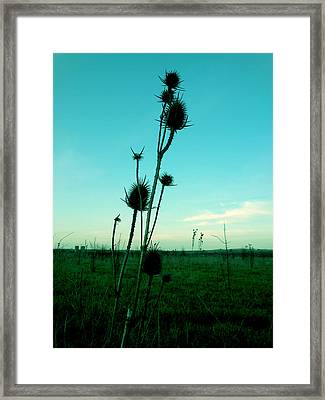 Standing Framed Print by Lucy D
