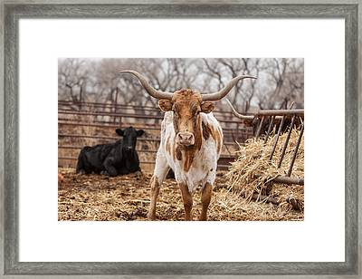 Standing My Ground Framed Print by Shirley Heier