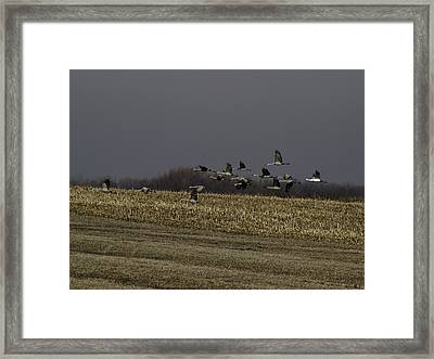 Standing Out 2 Framed Print by Thomas Young