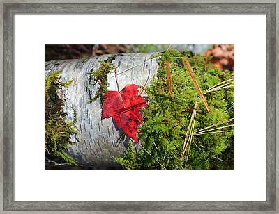 Framed Print featuring the photograph Standing Out by Alicia Knust
