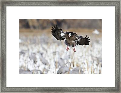 Standing Out Framed Print by Bryan Keil