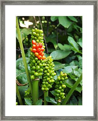 Framed Print featuring the photograph Standing Out In A Crowd by Deborah Fay