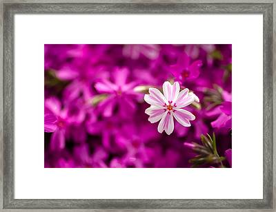 Standing Out In A Crowd Framed Print by Teri Virbickis