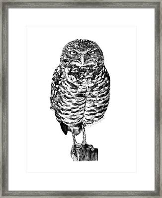 Framed Print featuring the drawing 041 - Owl With Attitude by Abbey Noelle