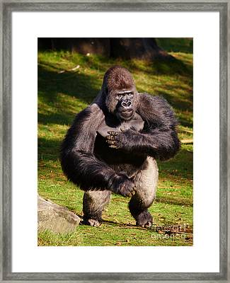 Standing Silverback Gorilla Framed Print