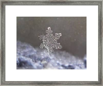 Standing Snowflake Framed Print by Lorella  Schoales
