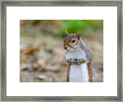 Standing Squirrel Framed Print by Matt Malloy
