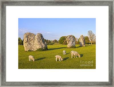 Standing Stones And Sheep Avebury Framed Print by Colin and Linda McKie